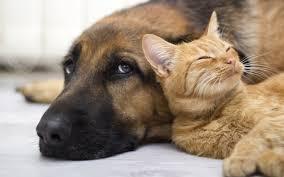 Cat dog 1