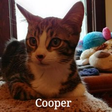 Cooper BPC