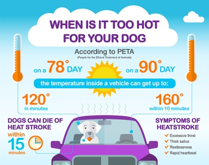 when-is-it-too-hot-for-your-dog-article