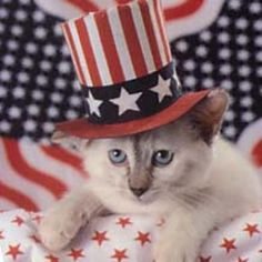 def8c0a3c622b7fcd831d8135c387393--red-white-blue-cats-in-hats