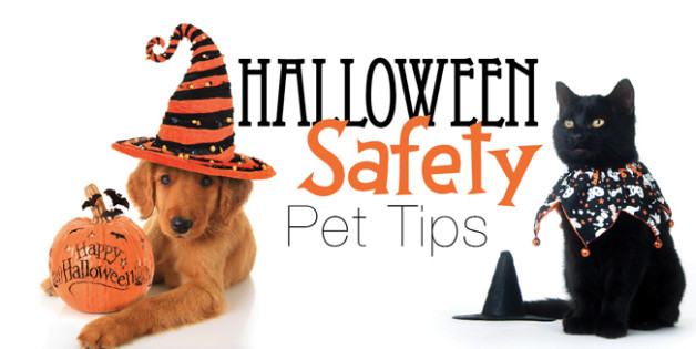 halloween-pet-safety-628x315